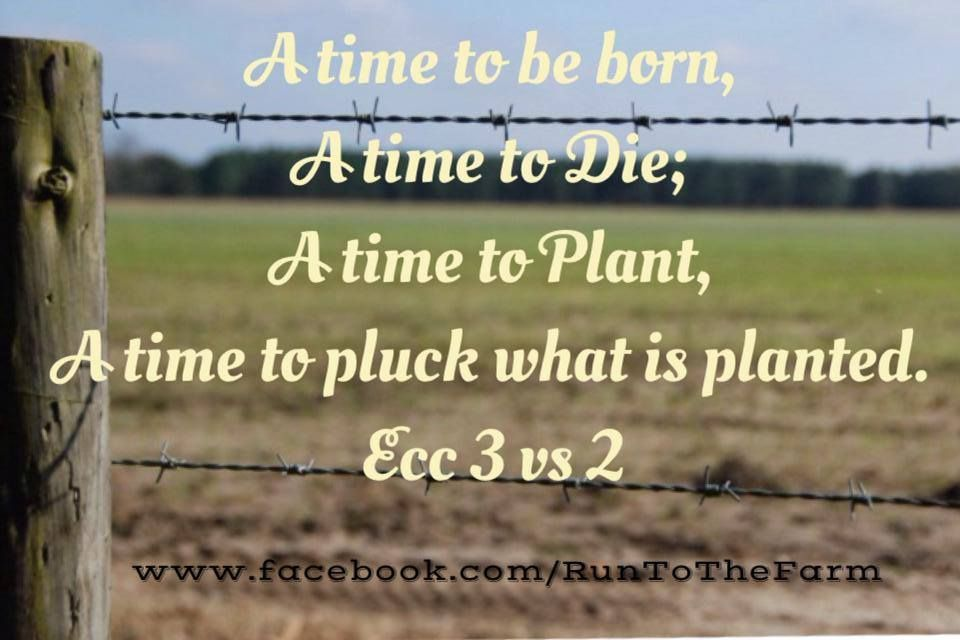 Farming Quotes Brilliant Farming Quotes  Run To The Farm  Run To The Farm  Pinterest . Decorating Inspiration
