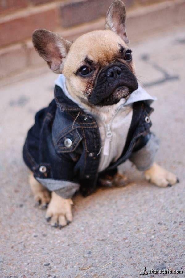 Fashion French Bulldog Baby Dogs Cute Animals
