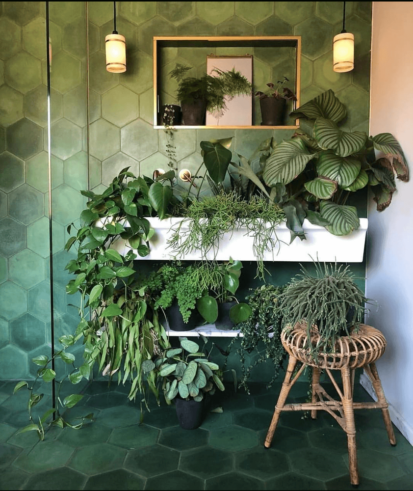 Best Plants For A Bathroom Without Windows In 2020 Indoor Plants Bathroom Plants Cool Plants