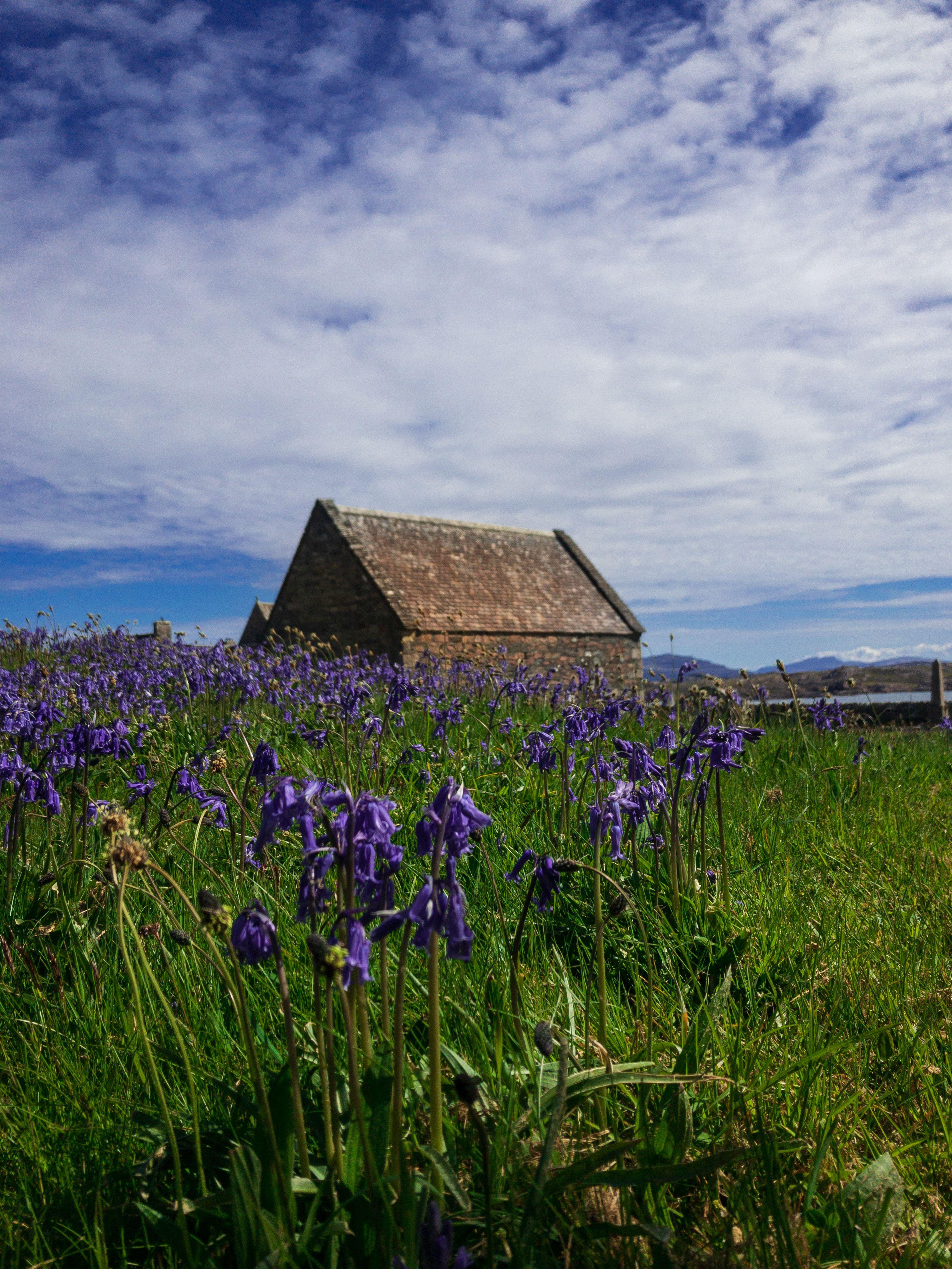 Abbey on the island  #travel #scotland