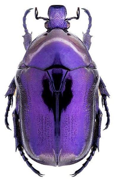 Purple   Porpora   Pourpre   Morado   Lilla   紫   Roxo   Colour   Texture   Pattern   Style   Form   Silvia Patricia Balaguer