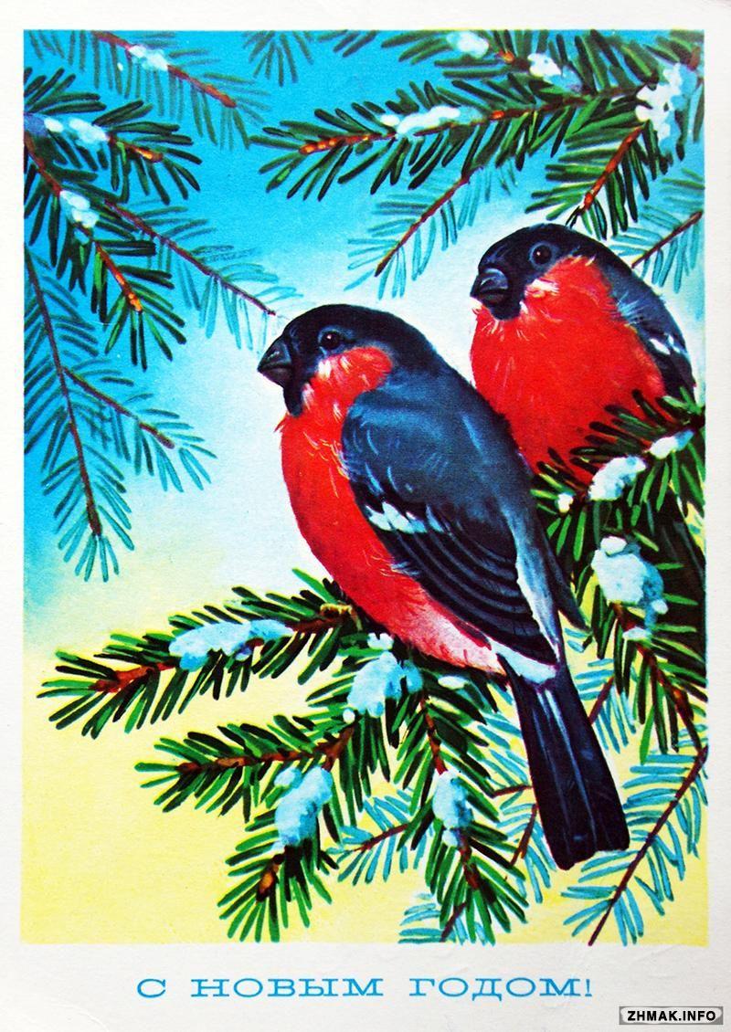 Картинка, новогодняя открытка с снегирями