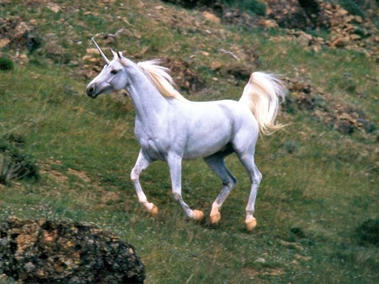 real unicorns - Google Search | UNICORNS | Pinterest ...