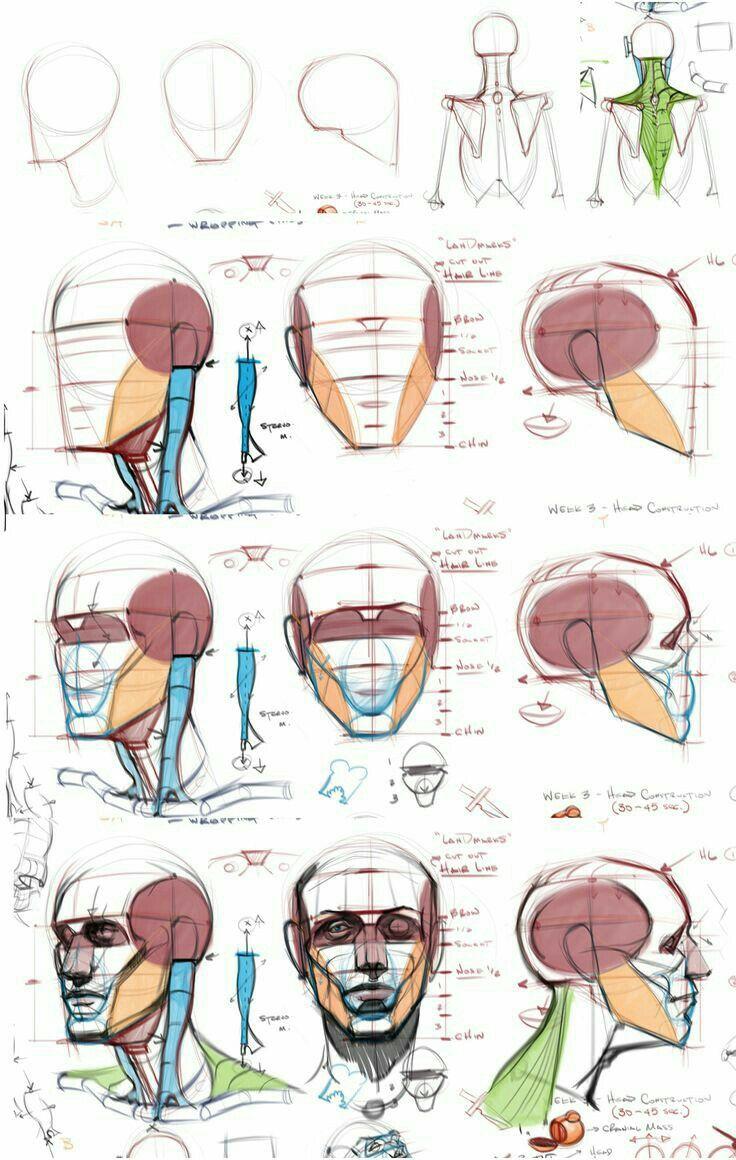 Pin von Eduard Art auf Anatomy   Pinterest