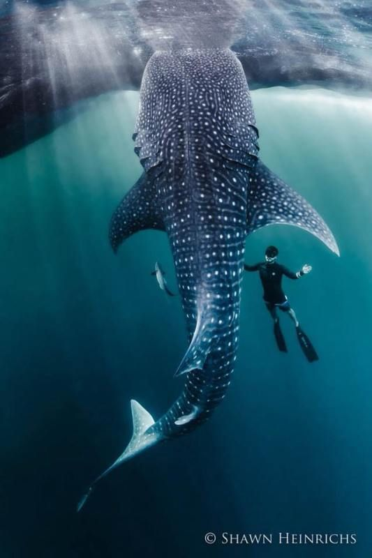 'Racing Extinction' Photographer Wants to Protect One of Most Diverse Marine Habitats in World — Will You Join Him? - One Green Planet