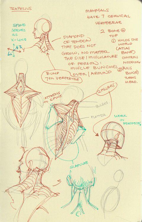 Mari Arakaki explique comment dessiner l\'anatomie humaine | arte ...