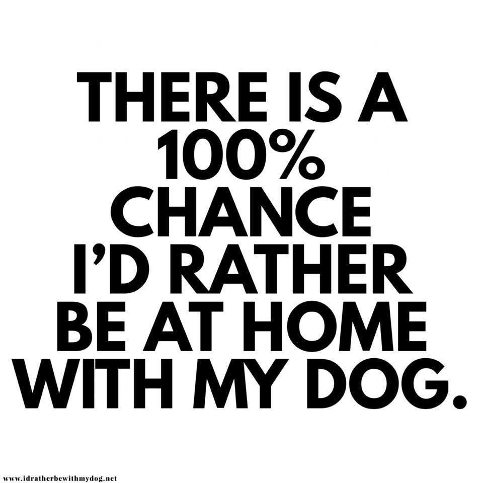 Especially On A Nice Day Like Today Dog Quotes Quotes Funny