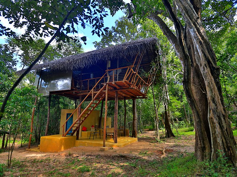 Pin On Experiences Not To Miss When In Sri Lanka
