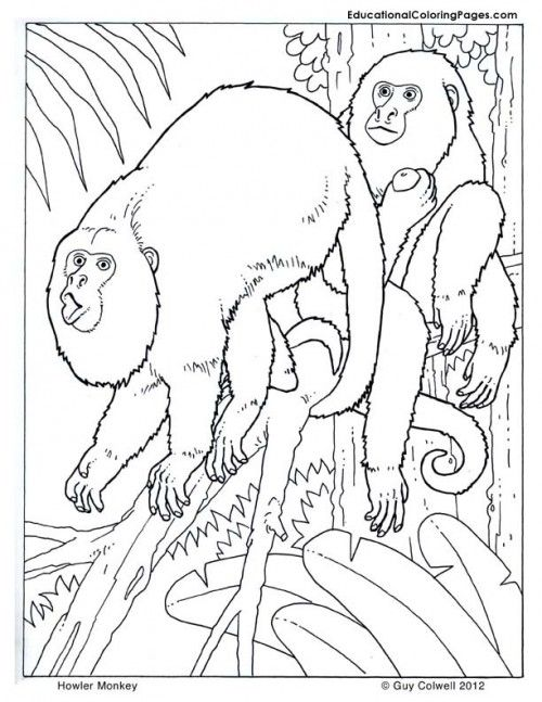 Howler Monkey Coloring Page
