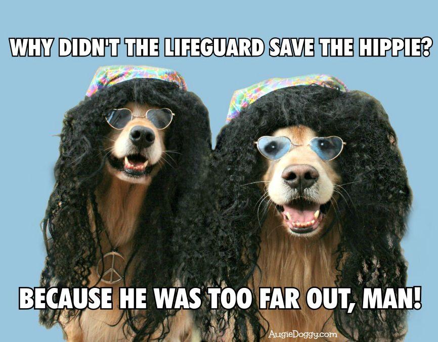 Funny Golden Retriever Lifeguard Hippie Joke Post Card by #AugieDoggyStore