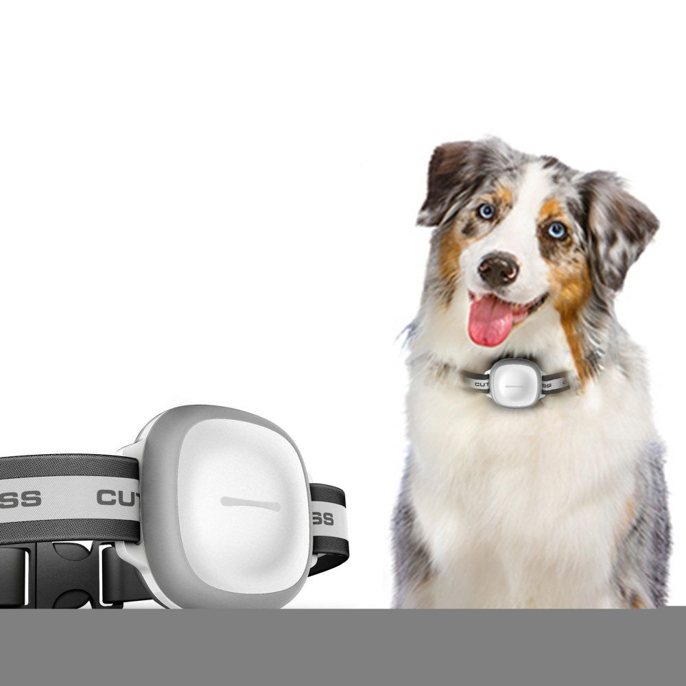 Modern Gps With Wifi Pet Tracker For Dogs Pet Tracker Pet Gps Mini Gps Tracker