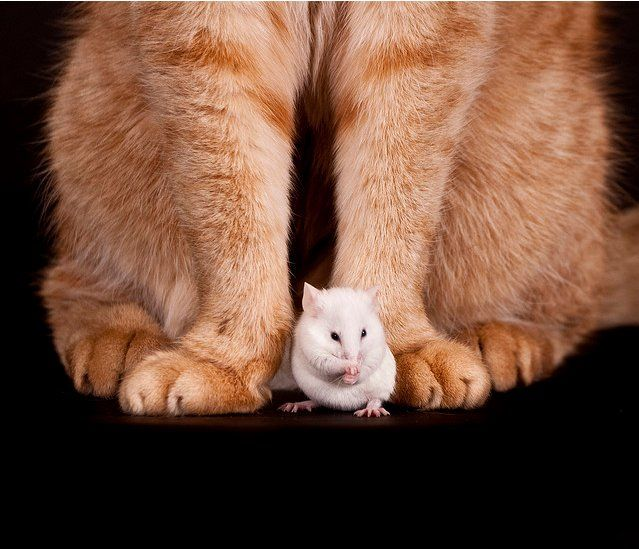 Cat Mouse Meet Susie Homemaker Here Www Susiehomemaker Com Www Youtube Com User Susiehomemakerco Www Tw Cat Memes Clean Funny Cat Memes Funny Cat Pictures