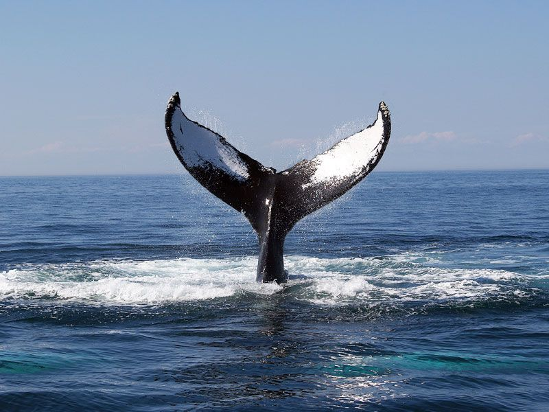 san diego sailing cruises | Whale watching cruise, Whale ...