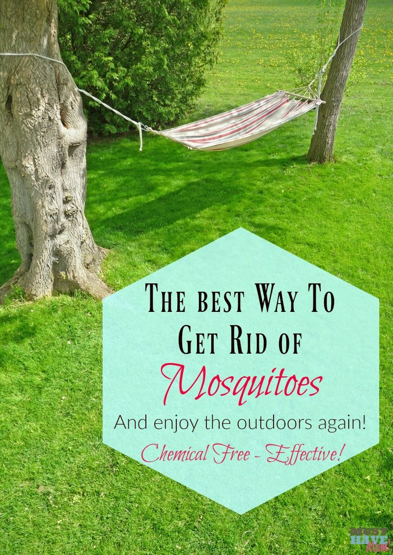 The best way to get rid of mosquitoes and enjoy the ...