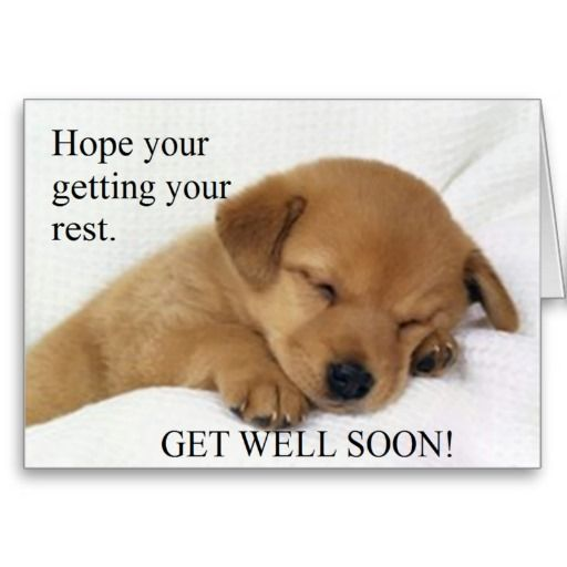 Get Well Soon Greeting Card Zazzle Com Baby Animals Pictures Puppies Pets