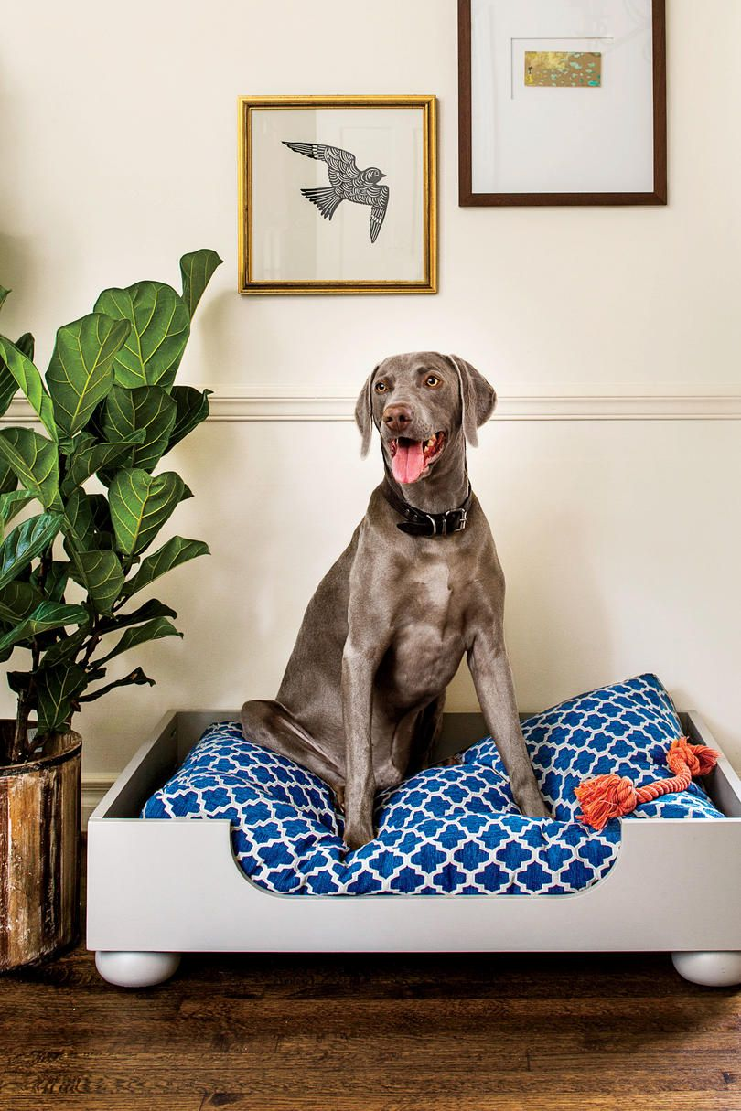 Our Favorite Names for Southern Dogs Dog bed, Wooden dog