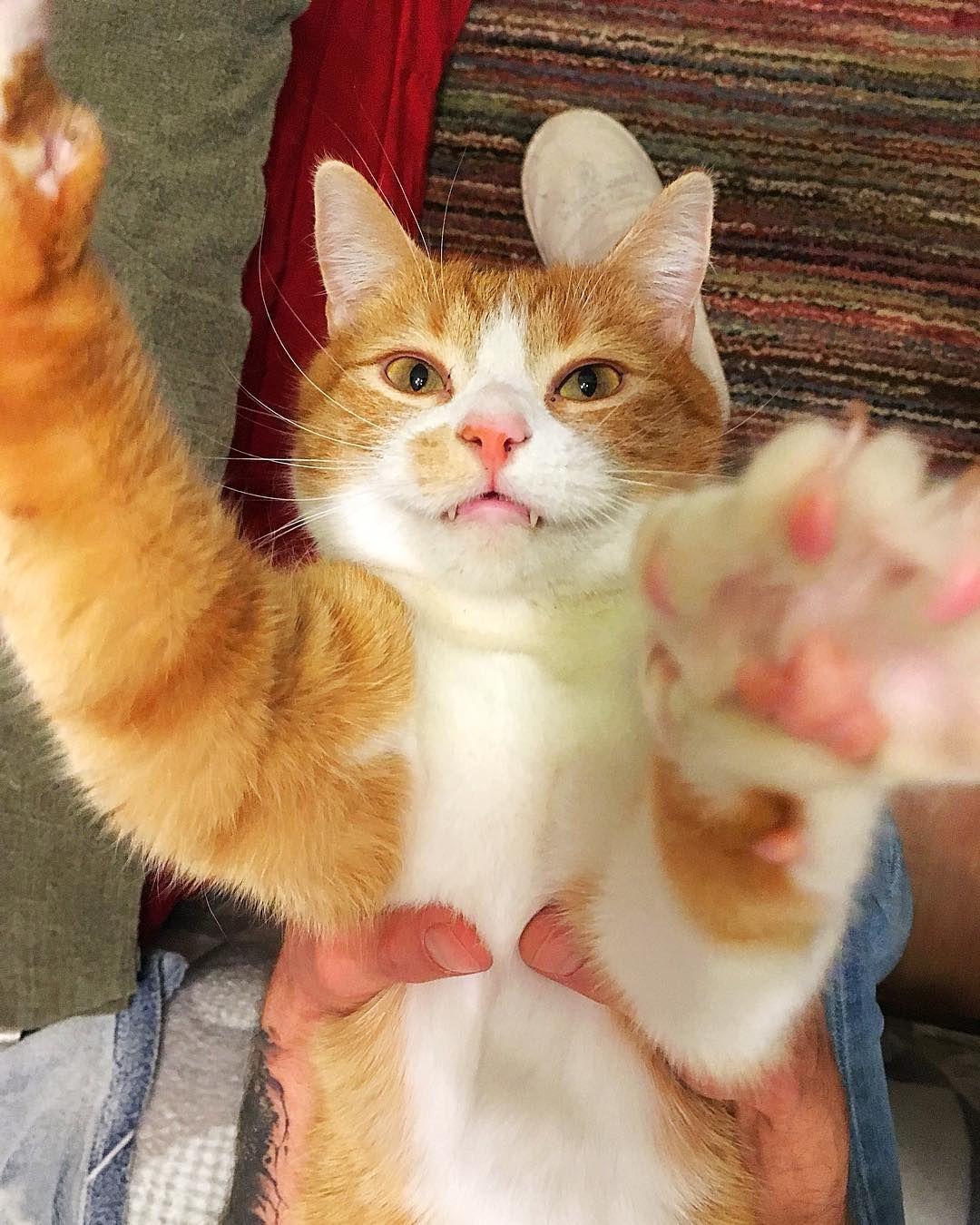 Kitty Cat Cats Kittens Kitten Cutecat Whitecat Funnycat