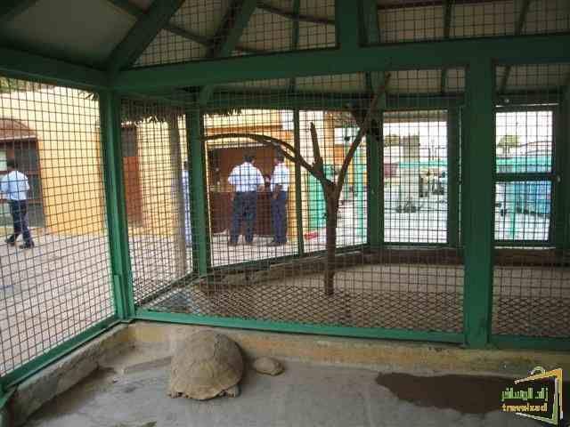 دليل لايفوتك حديقة حيوانات القلعة واحدة من ابرز المزارات السياحية العائليىة بالخبر لايفوتك زيارتها والاستمتاع بها Home Decor Decor Room Divider