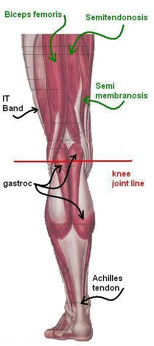 It Band Gastrocnemius Semitendonosis Semimembranosis Bicep