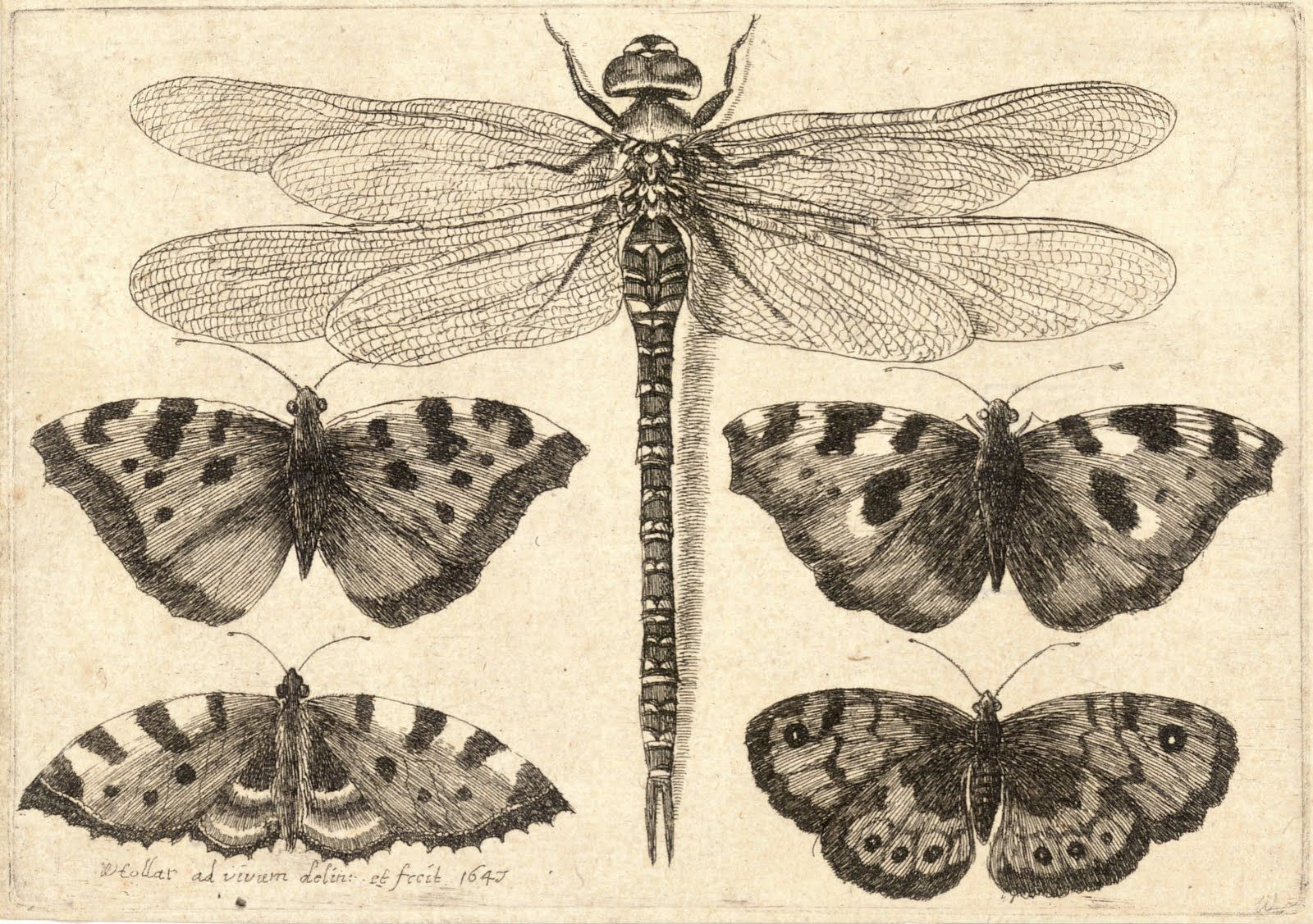 Vintage Ephemera: Etching of butterflies and dragonfly - 1647