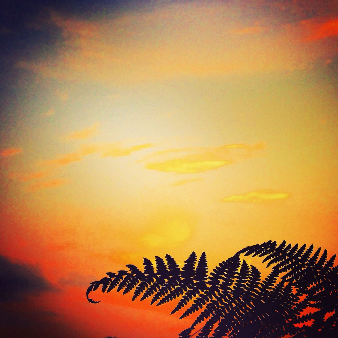 The capitulating curl of a drying fern against an autumn sunset. #fern #sunset #english #beautiful #sky #landscape #bucolic #pastoral #peace #tranquil #love #romance #evening #foliage #pretty #pastel #orange #silhouette #leaf #curl #newforest #forest #greenery
