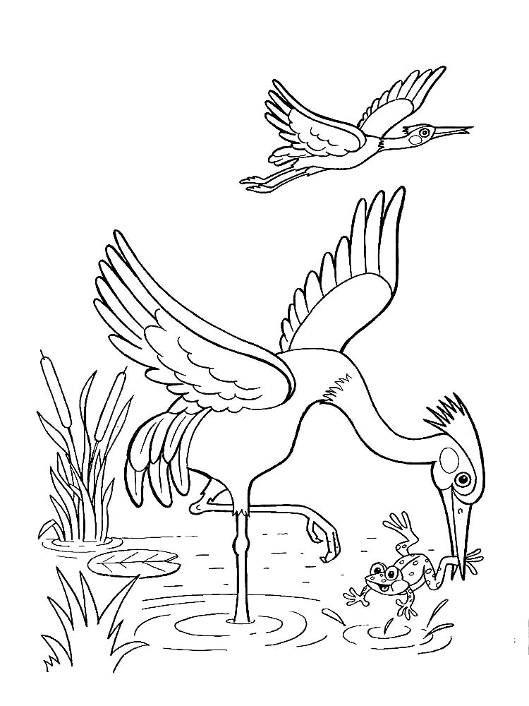 Mewarnai Gambar Rumput : mewarnai, gambar, rumput, Mewarnai, Gambar, Burung, Bangau, Burung,, Flora, Fauna,