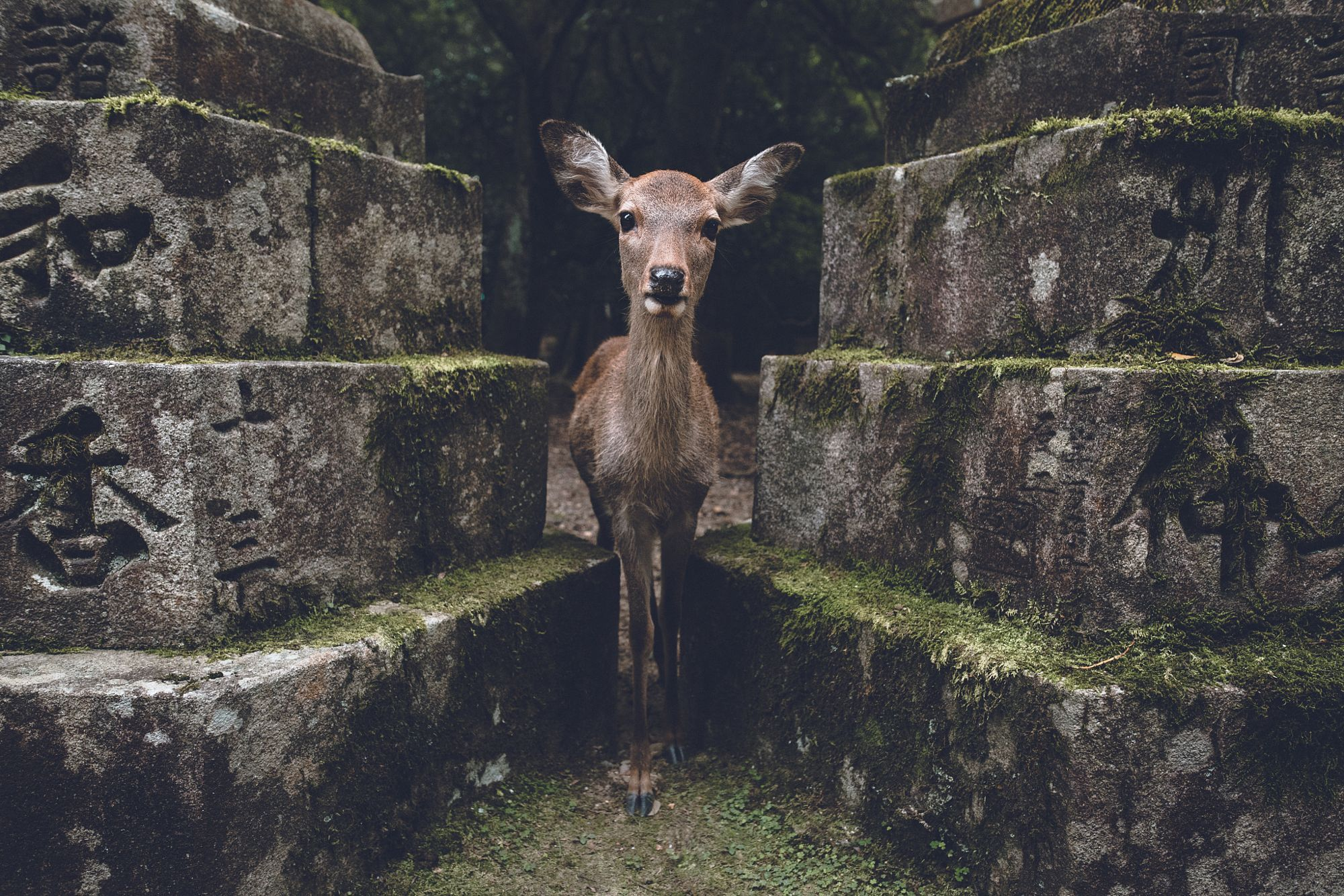 not pictured, the deer trying to eat my camera by Zach Allia on 500px