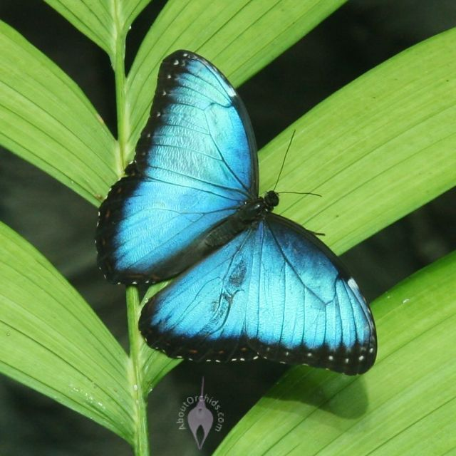 Butterfly Images Google Search Butterfly Images