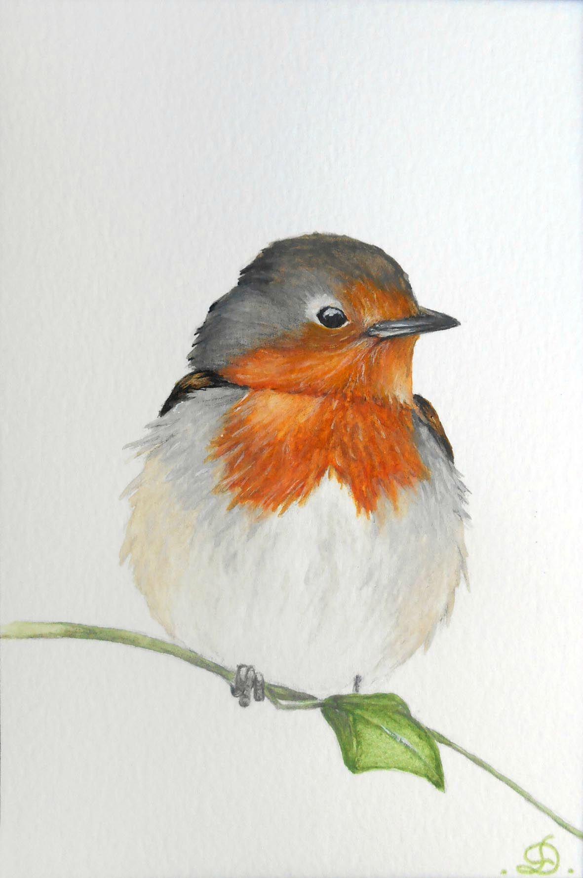 Resultat De Recherche D Images Pour Aquarelle Rouge Gorge Bird