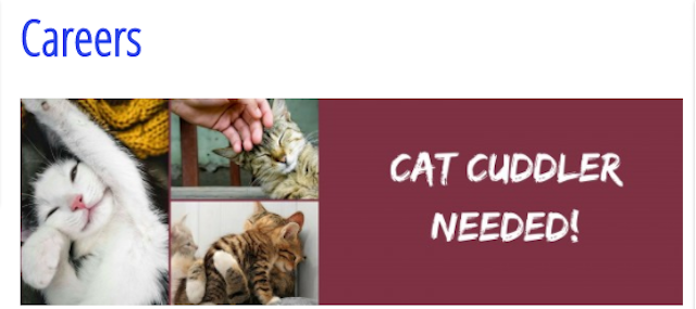 Your Dream Job Exists This Vet Clinic Looking To Hire A Cat Cuddler Vet Clinics Vets Clinic