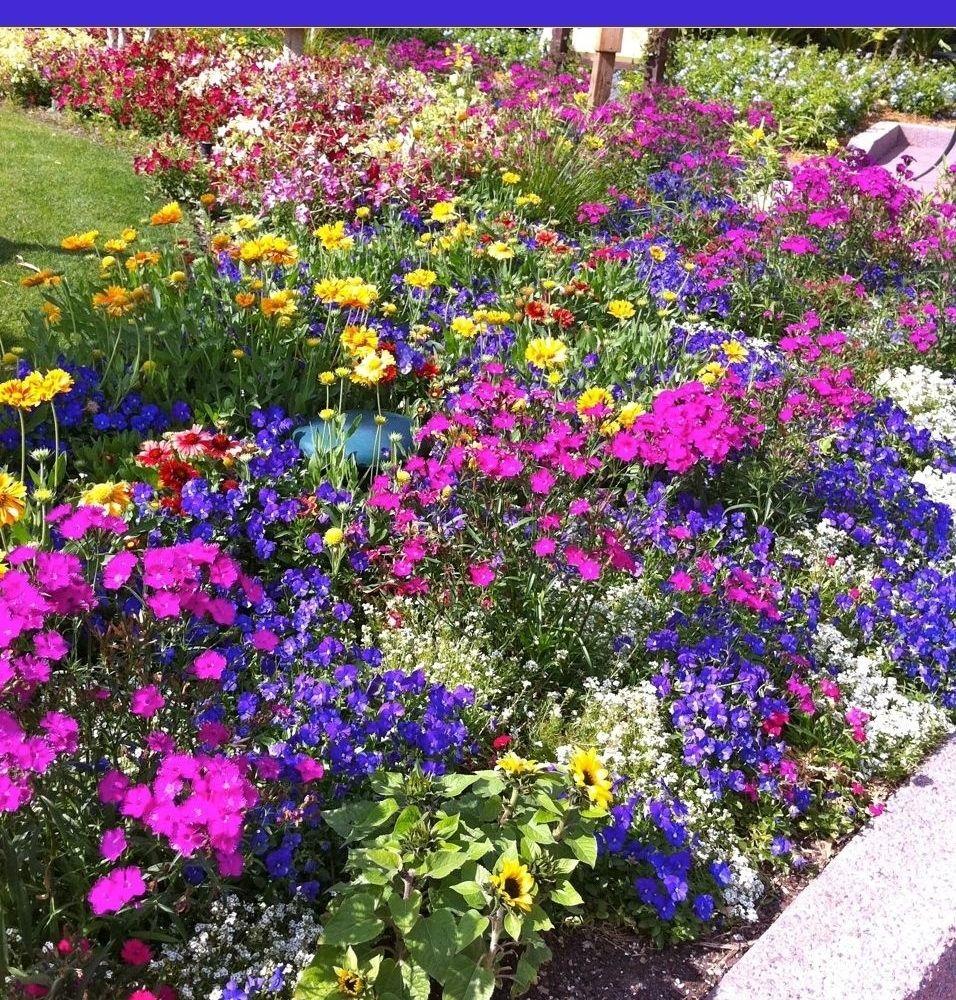 Flower Gardening 101 Beautiful Flowers Garden Flower Gardening
