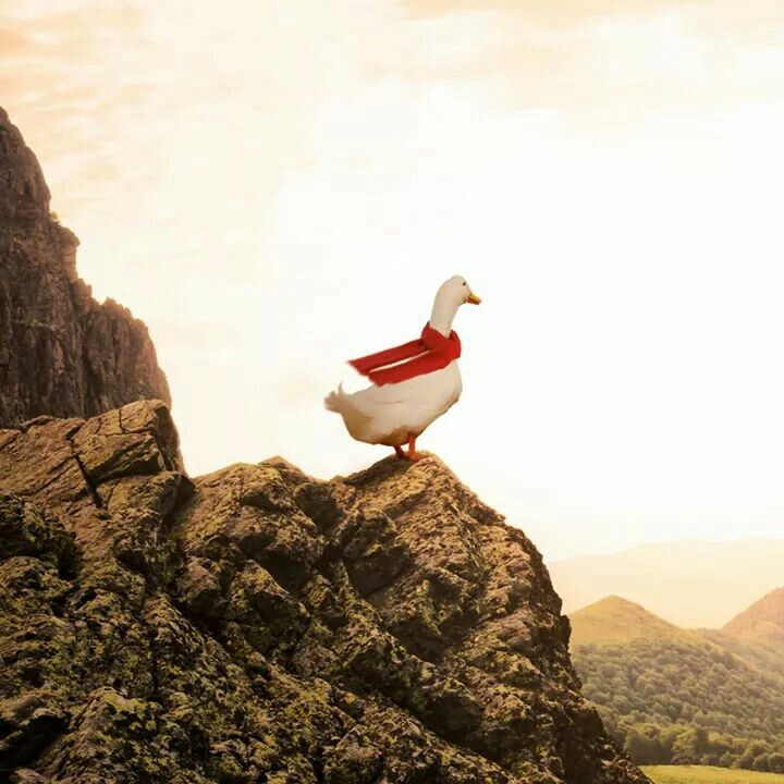Aflac Duck I Made It To The Top This Is What You Call Living Aflac Duck Cute Little Animals Funny Animals