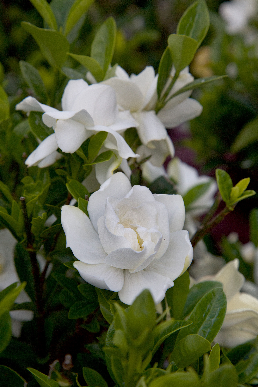 Top 5 Plants For Spring Plants Flowering Shrubs Garden Planning
