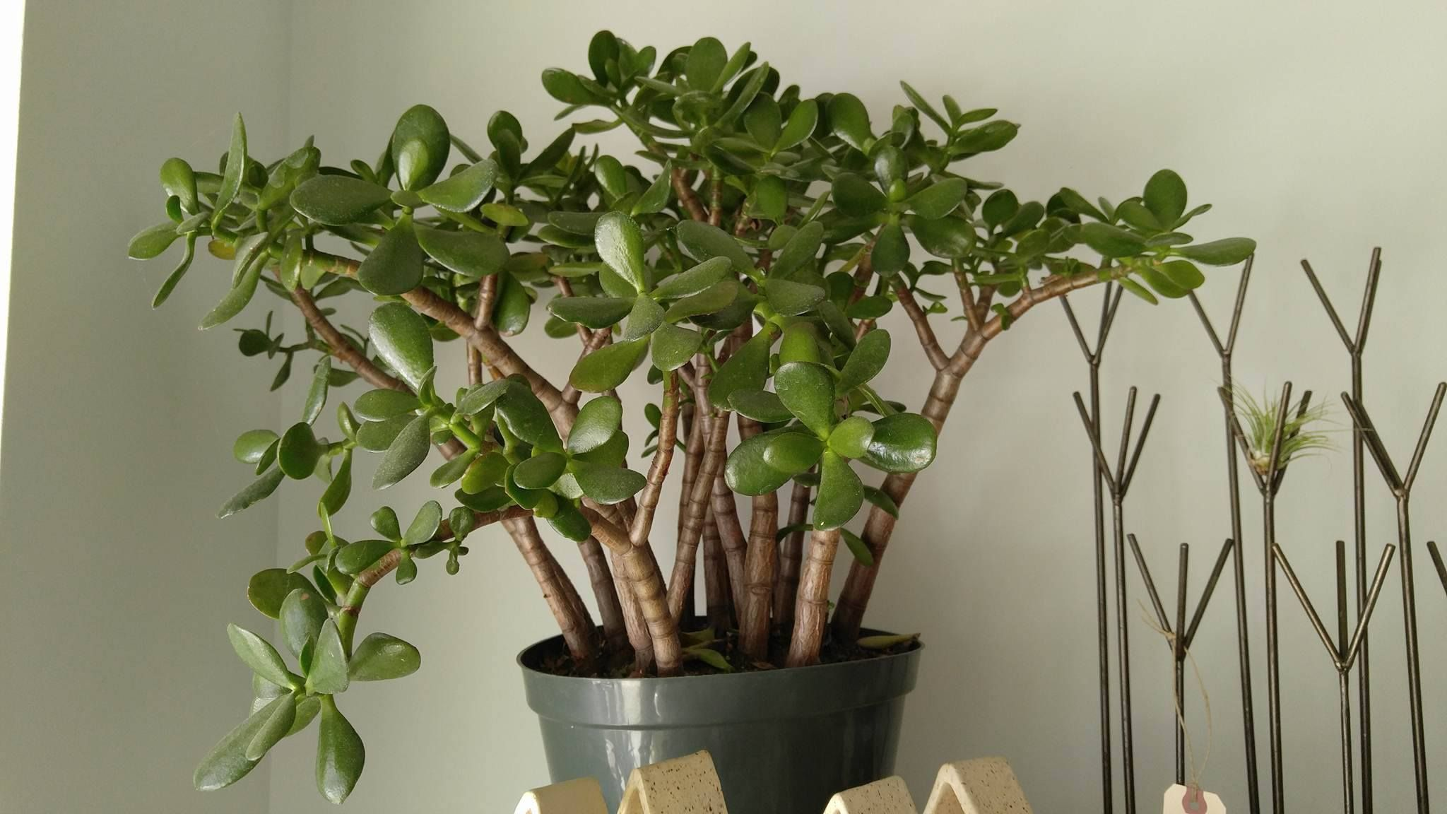 Fortunately, There Are Tons Of House Plants That Thrive In