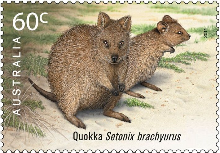 A STAMP ISSUED ON THIS BEAUTIFUL MARSUPIAL | Quokka ...