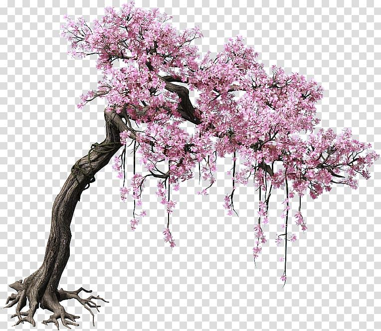 Pink Cherry Blossom Tree Peach Tree Color Game Scene Trees Transparent Background Png Clipart Cherry Blossom Watercolor Cherry Blossom Drawing Blossom Trees