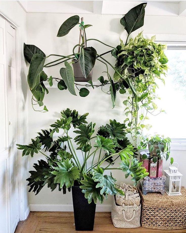 muriloguterres deco jungle outdoor plants indoor plant pots gardening also  floral love rh pinterest