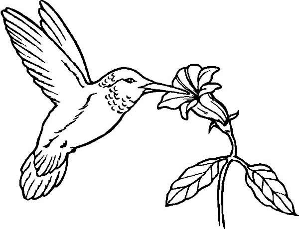 Humming birds coloring for kids