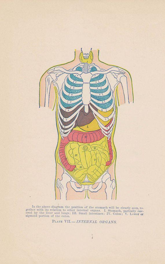 Antique Internal Organs Anatomy Illustration Chart 1897