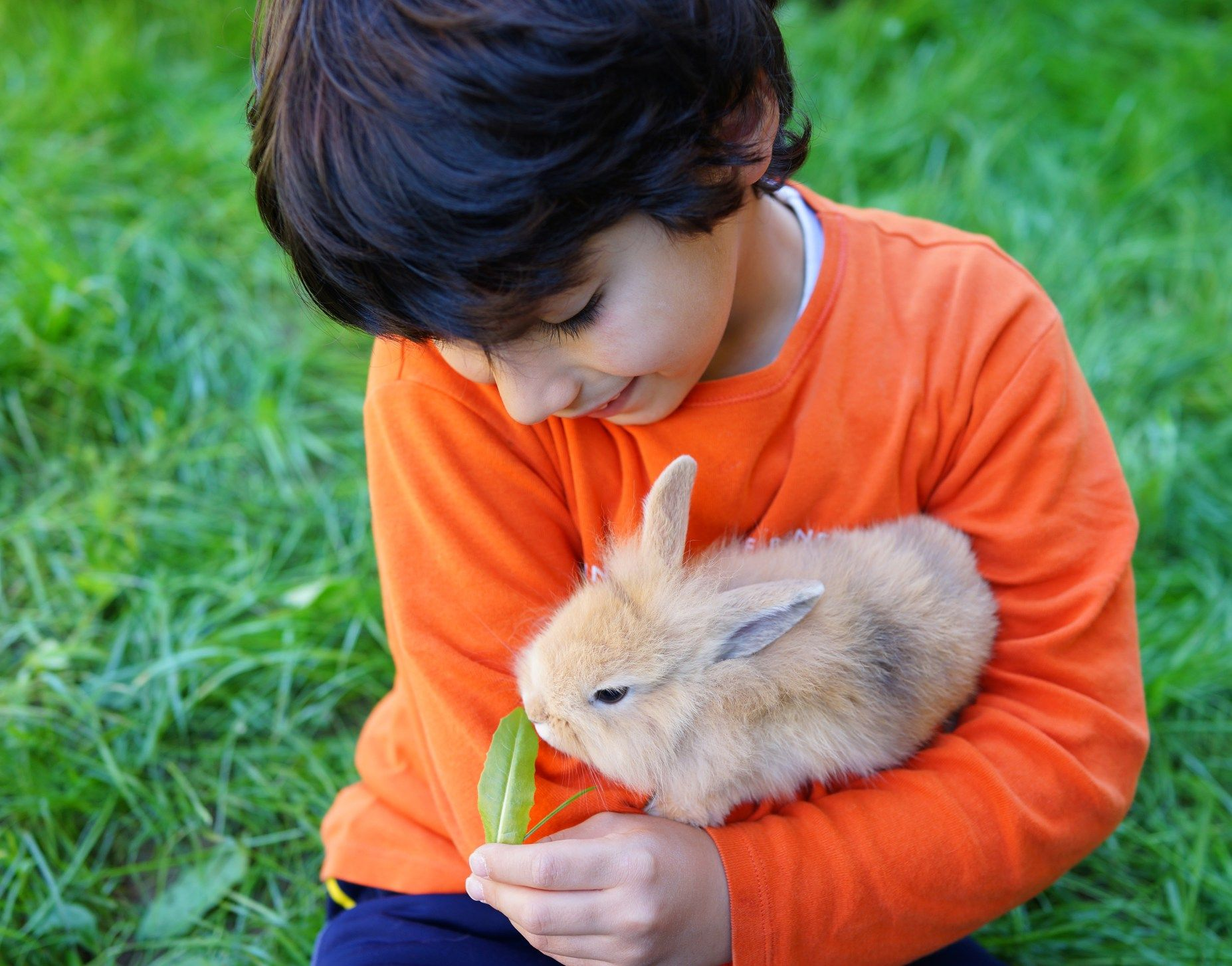 Easy Treatments for Ear Mites in Rabbits Raising rabbits