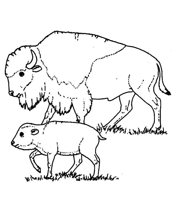 Free Printable Bison Coloring Pages For Kids Animal Coloring Pages Coloring Pages Coloring Pages To Print