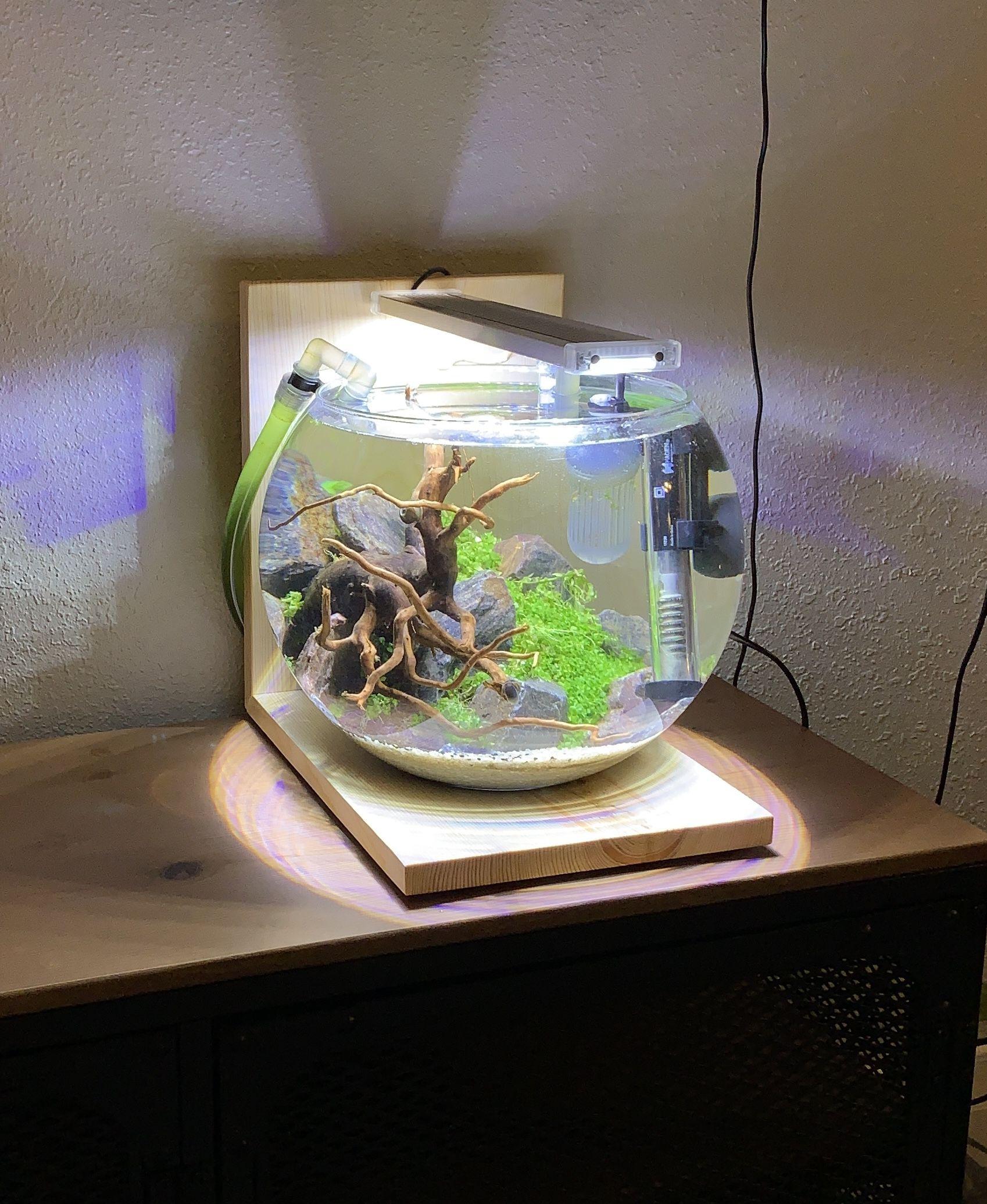 Newest Bowl Aquascape Nature Aquarium Shrimp Tank Pet Shrimp