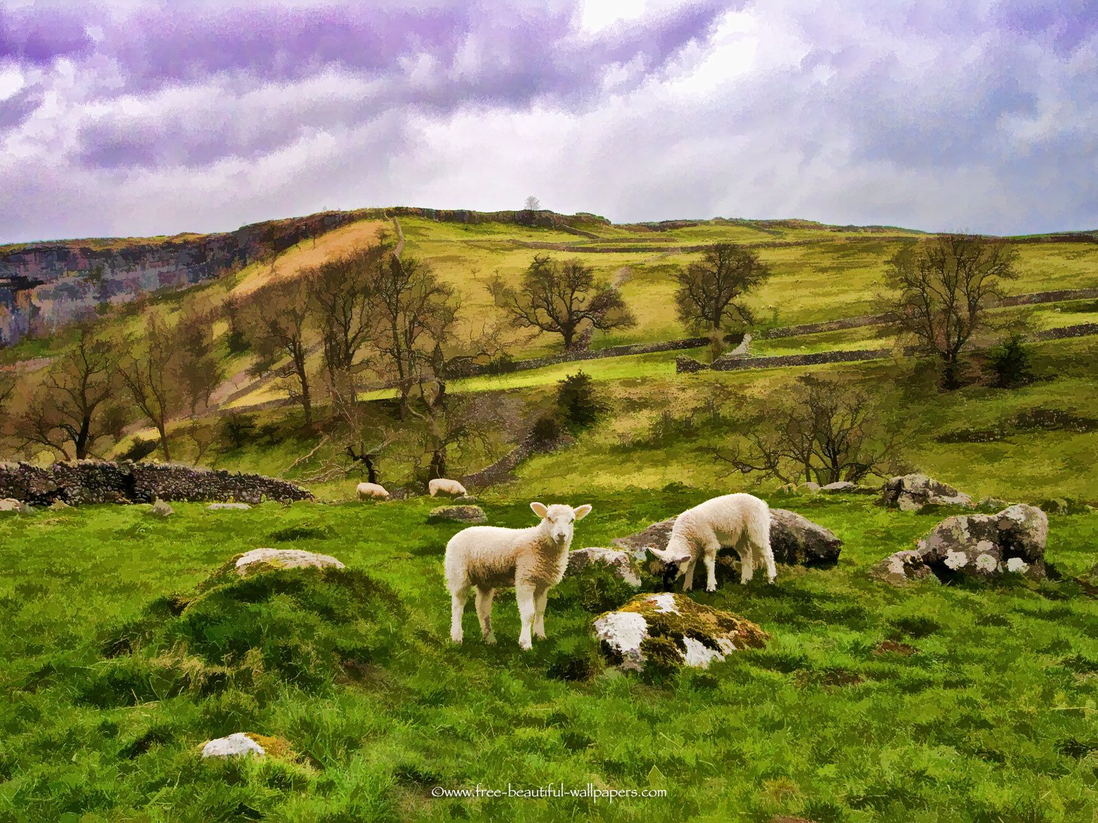 Yorkshire Dales | Yorkshire Dales Sheep Beautiful Landscape HD Wallpaper