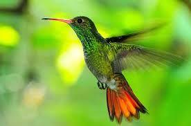 Resultado de imagen para selva peruana flora y fauna