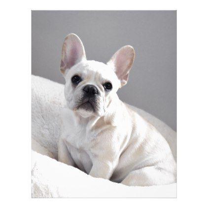 Cream Frenchie | Zazzle.com #frenchbulldogfullgrown