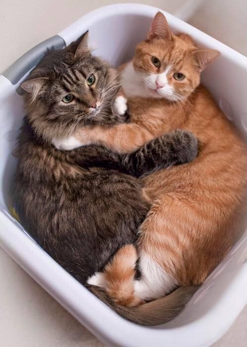 TOP 28 Cats Pictures -