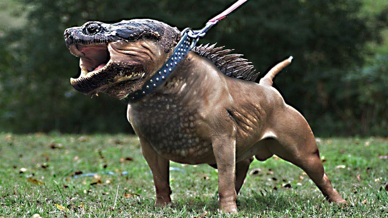 10 most shocking animal mutations youtube animals