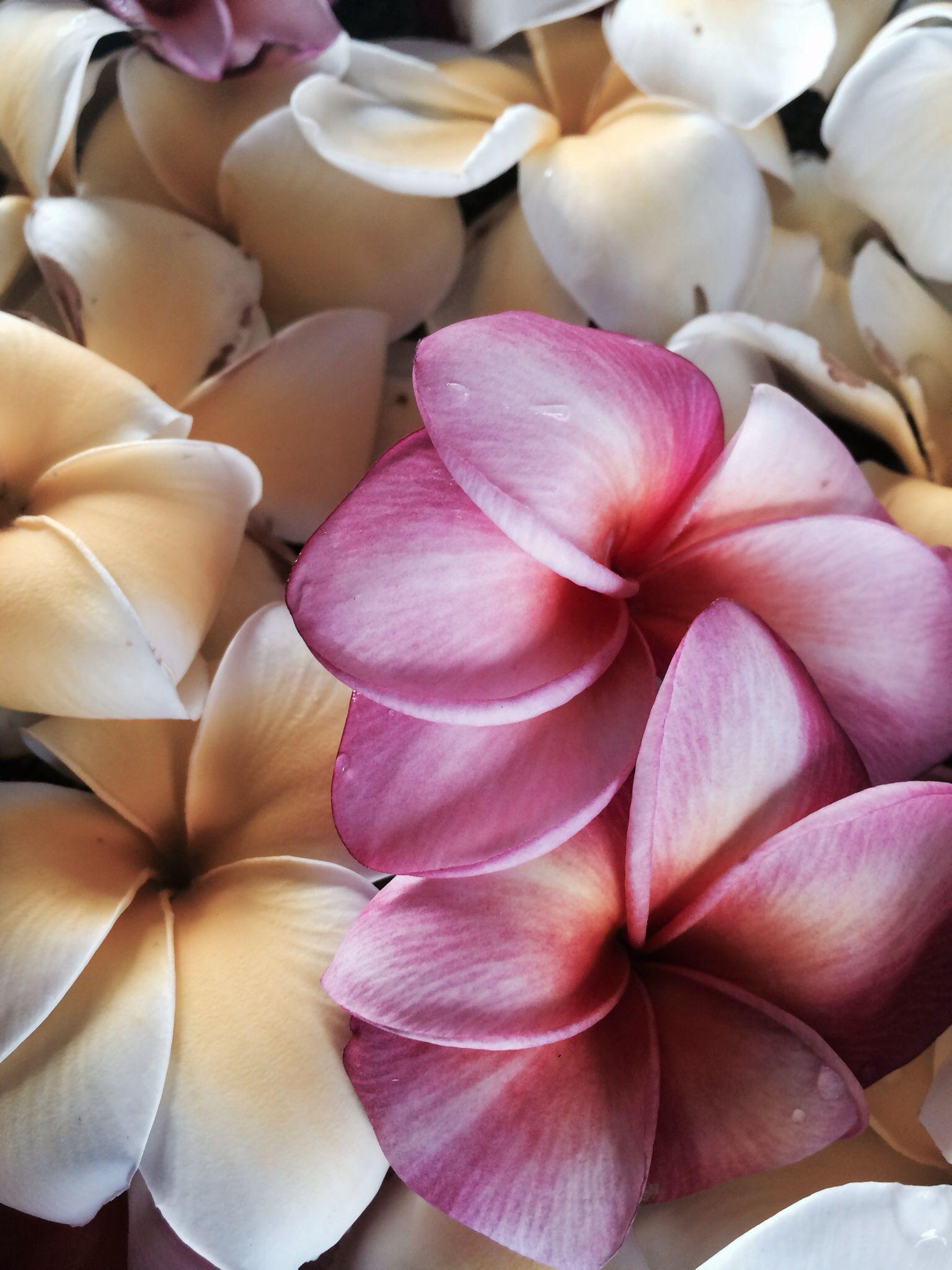 Hawaiian flowers hawaii pinterest hawaiian flowers hawaii hawaiian flowers izmirmasajfo