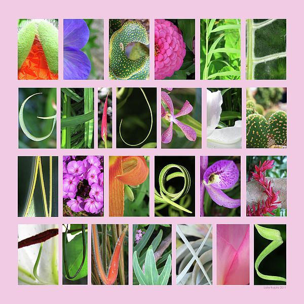 Nature Alphabet 2 In Pink By Laila Kujala Alphabet Photography Letter Photography Alphabet Photography Letters