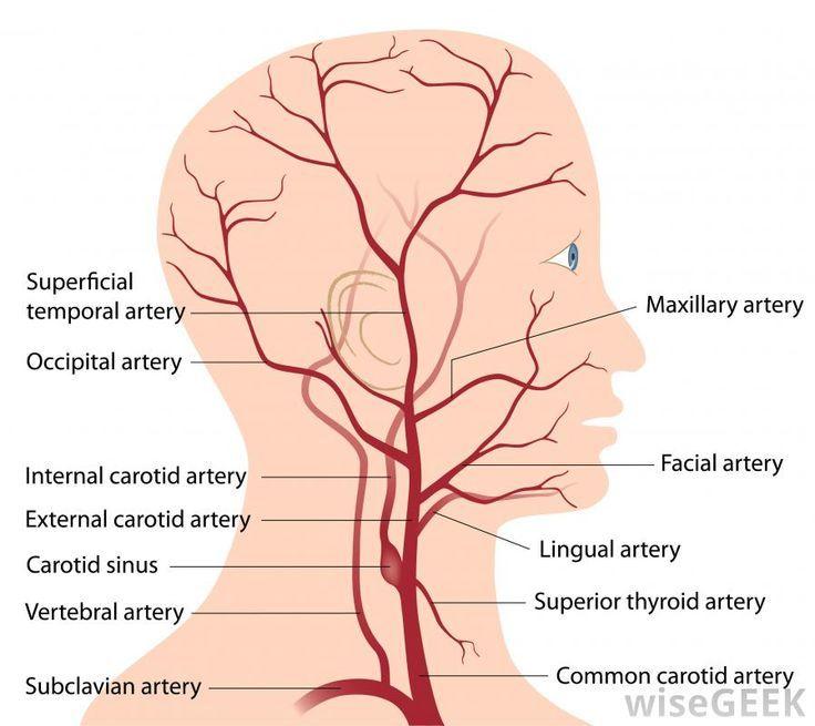 Image Result For External Carotid Artery Angiogram Flash Cards